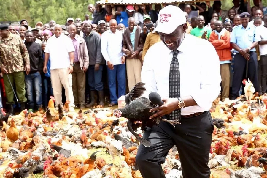Kenya: What Kenyans Had Say About DP Ruto's Chicken Stunt