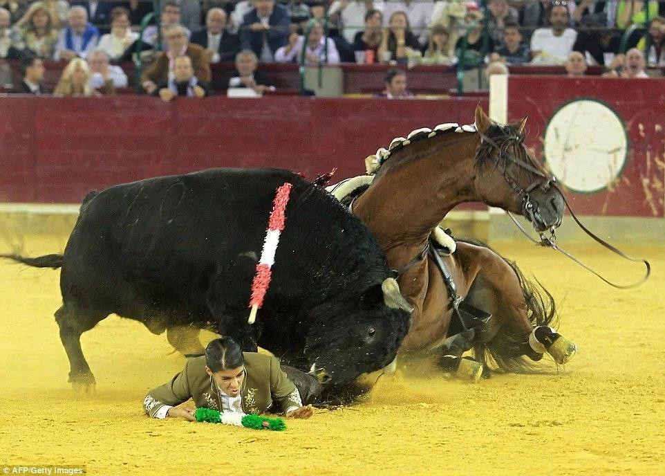 Ella le cortó las orejas a un toro y ellos tomaron venganza