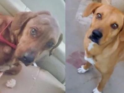 La sorprendente recuperación de un perrito enfermo que fue rescatado en México