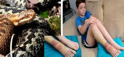Niño, de 8 años gritando en agonía al ser atacado por una serpiente después de tropezar con su nido