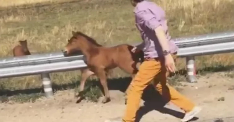 Heart-melting video of how a foal was reunited with it's mother
