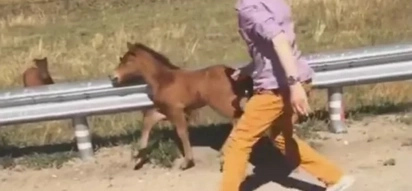 Watch this touching video of a man help a foal reunite with it's mother!