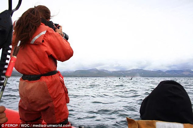 Albino killer whale caught on camera after 4 years missing!