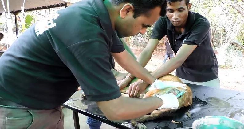 Image: YouTube/Animal Aid Unlimited, India