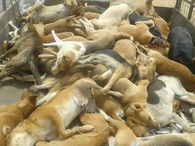 82 dogs and 2 cats killed for a CHILLING reason in Machakos