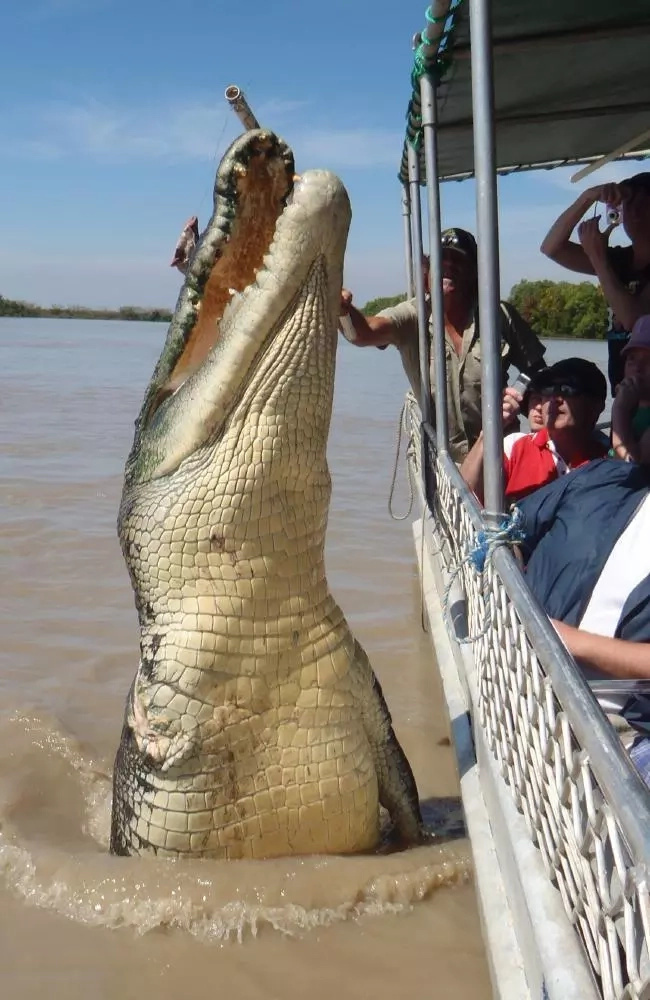 Meet the 'Dominator', a gigantic 6.1m crocodile that keeps tourists flocking to see him
