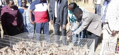 Ruto gifts women KSh 3 million worth of chicken in his home constituency as early Christmas