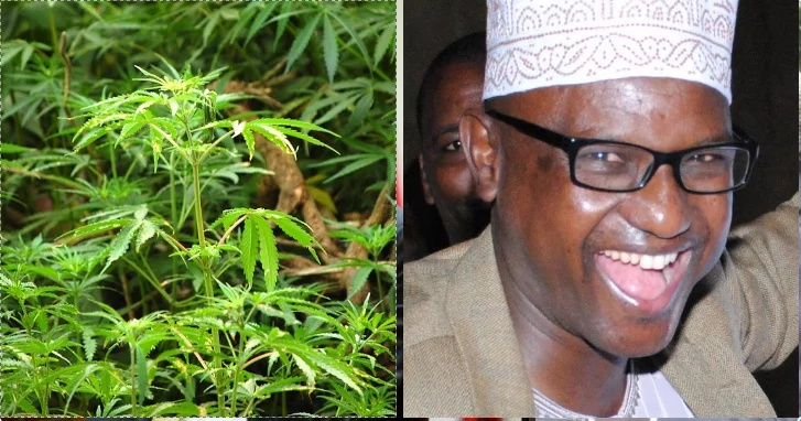 Petition to legalise bhang tabled in the senate and Kenyans are SUPER excited