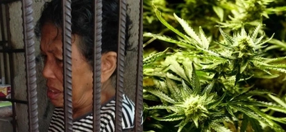 Hustler pala si lola! Grandmother who sells drugs to feed grandchildren gets arrested