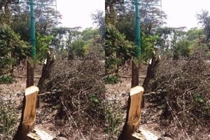 Outrage as advertising company cuts down trees in Nairobi to erect billboards (photos)