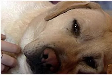 Dogs are heroes too! Here are 8 dogs who laid down their lives
