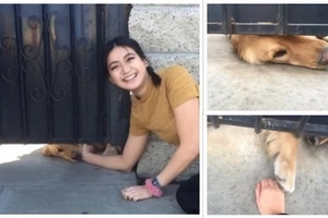 Viral dog waits for Elisa everyday after school and the internet has fallen in love
