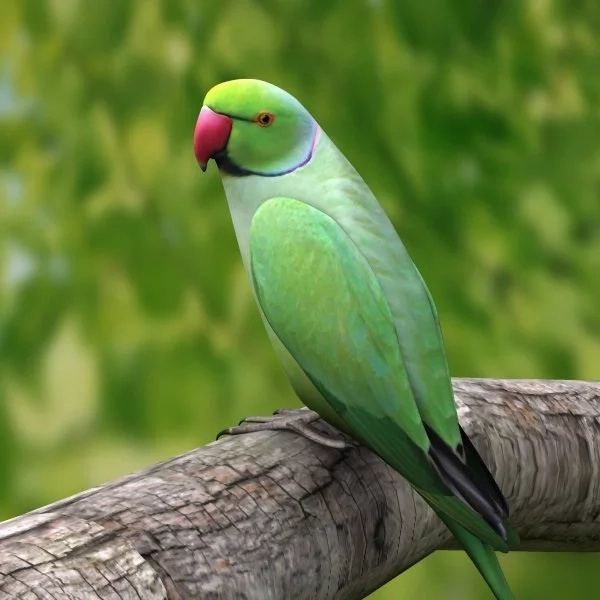 Woman files complaint against parrot for cursing at her