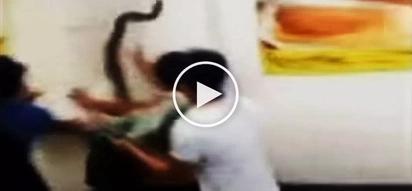 Terrifying giant python savagely bites Pinoy customer in Biliran restaurant