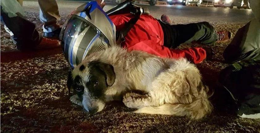 Este perro vio a un hombre herido en la calle y se quedó junto a él hasta que llegó una ambulancia