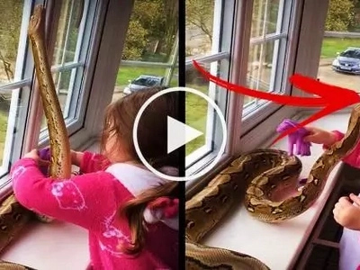 Watch this 3-year-old girl attempt to play with a deadly giant python! What the snake does next will shock you!