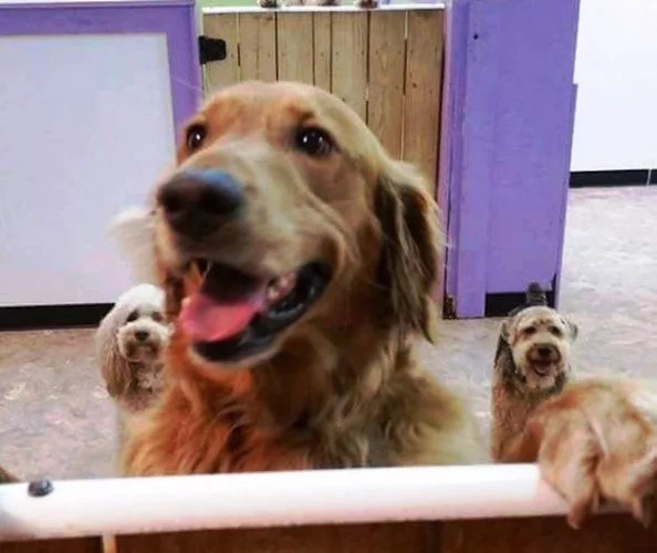 Dog ran away from home to be with friends at the daycare
