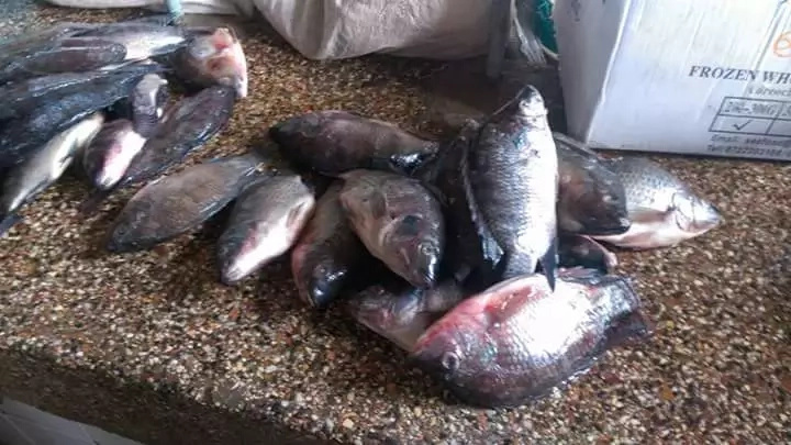 Kisumu residents defy MPs' directive on fish from China