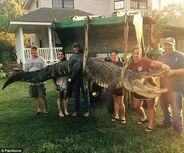 Female hunter caught record-breaking monster Alligator