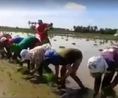 Bataan farmers sing joyfully while planting rice