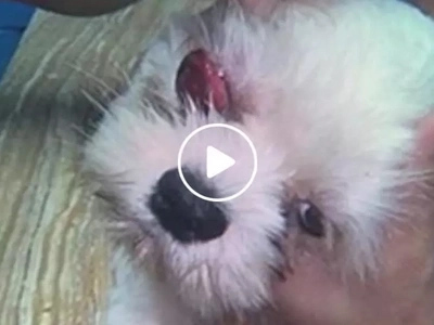 Dog suffers blindness and deafness after being brutally hit by steel tube on the head