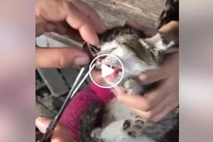 Enraged netizen warns heartless person who cut his poor kitten's ear and sewed its eyes together