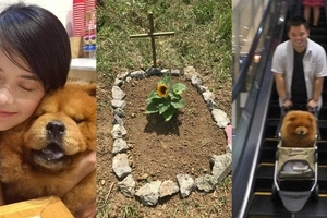 Netizen shares eye-opening message for non-dog lovers after the heartbreaking death of their 'baby Raiyah'