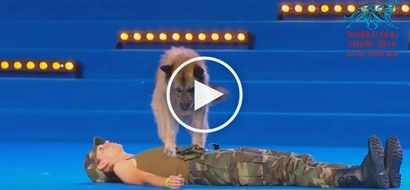 VIDEO: Dog performs CPR on owner, leaves audience in awe!