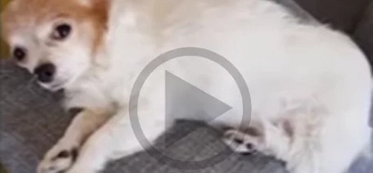 WATCH: What this dog did after getting a 'middle finger' will make you laugh