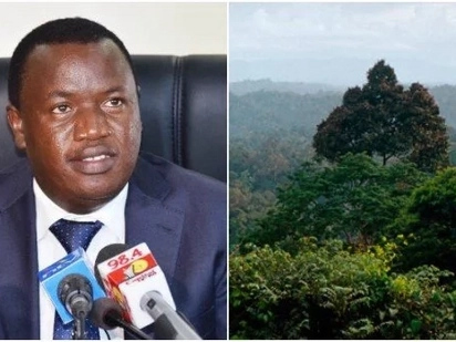 Government to install CCTV cameras in forests to curb tree harvesting