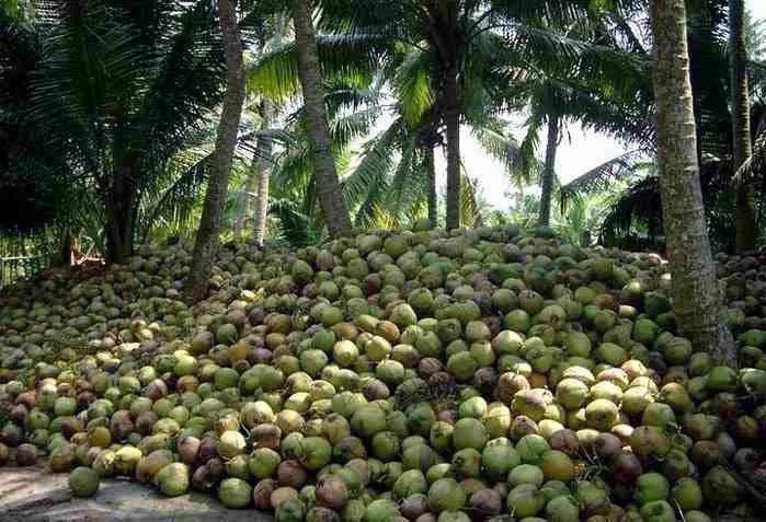 Probe on econ sabotage of China to RP coco industry sought