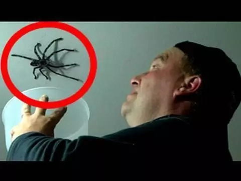 5 Creepy crawlers' attacks caught on video