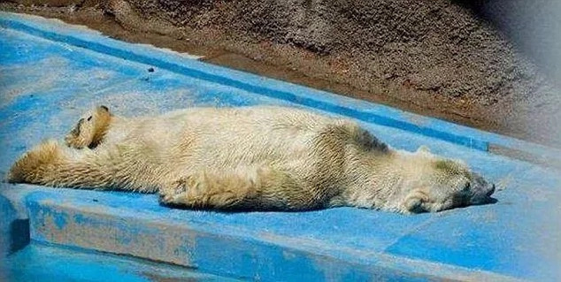 RIP Arturo: Depressed polar bear passed away in Argentina