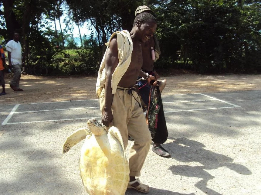 lamu residents blame low sex drive on ban of turtle meat