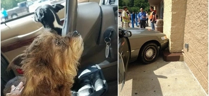 The owner of two cute dogs couldn't expect them do this, when left them alone in the car