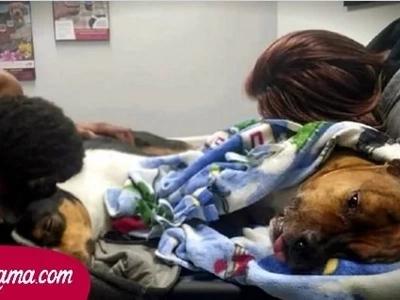 Primero, el perro se tambaleó, luego sus riñones dejaron de funcionar. Los médicos se horrorizaron con el diagnóstico