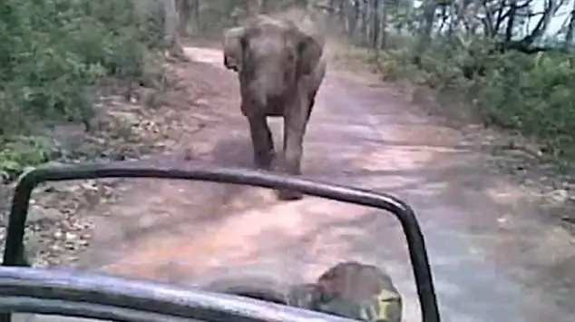 HUGE scare! These large, heavy animals almost stomped over tourists in India (photo, video)