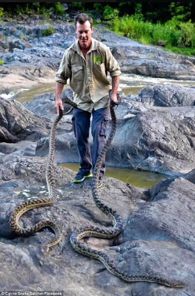 More than 20 DEADLY snakes found invading homes from flood waters (photos)