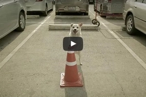 This dog repays stranger's kindness in unimaginable ways in VIRAL Thai commercial