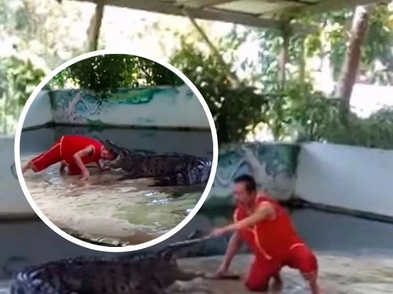 Horrifying moment a man puts his head between crocodile's jaws, nearly gets decapitated