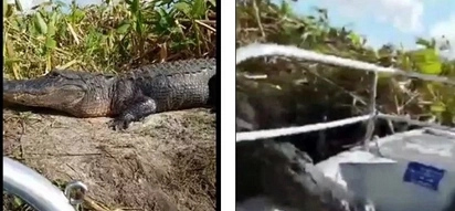 Heart-stopping moment as huge crocodile JUMPS on boat, scares couple to death (photos, video)
