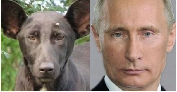 Dog Murdered By Russians Because He Looks TOO MUCH Like Putin (Photo)