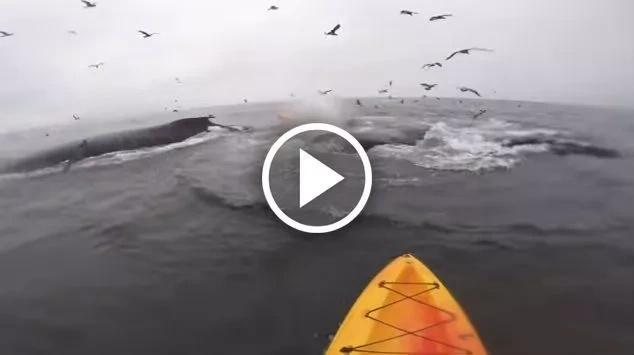 Sorprendente momento en que ballenas gigantes aparecen nadando al lado de estos deportistas