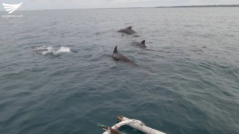 Locals spot playful dolphins in Aklan waters