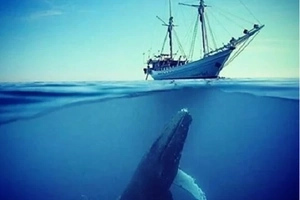 What is the Blue Whale Challenge and why you should be scared