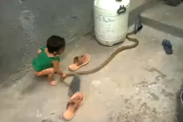 The boy took snake's tail in a hand