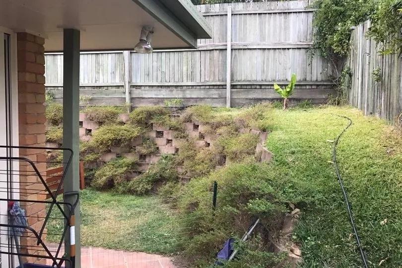 Photo of snake lurking in back garden leaves Facebook users scratching their heads, but can you spot the reptile?