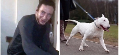 Sad! Bull Terrier dog eats crack cocaine, gets high and mauls 41-year-old owner to death