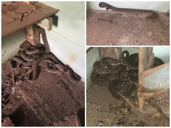 23 snakes invaded family's house, occupied TOILET, cellar and EVERYTHING (photos)