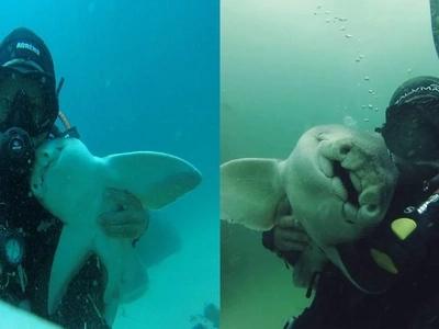Cada vez que va a bucear, este tiburón lo abraza (esto ha estado ocurriendo durante 7 años)